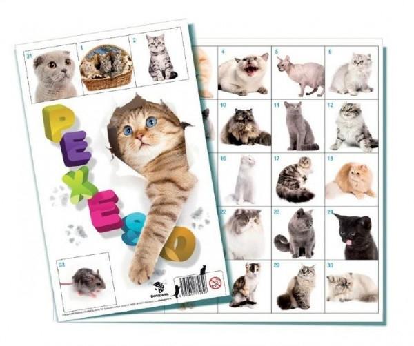 Teddies Pexeso Mačky spoločenská hra 32 obrázkových dvojíc